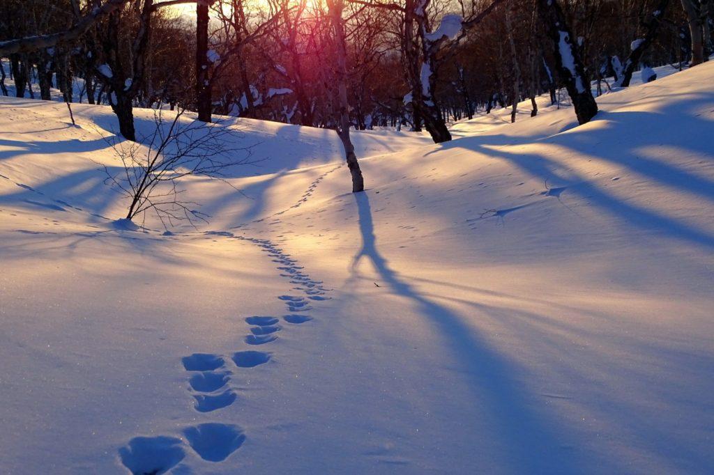 Schneefräse mit Bürste