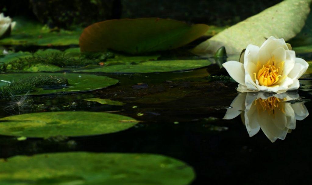 Teichsauger für kleine Teiche