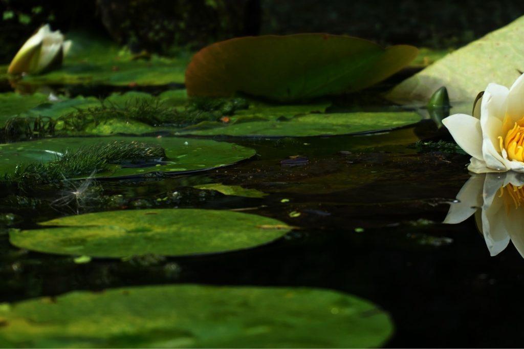Teichsauger mit Filter
