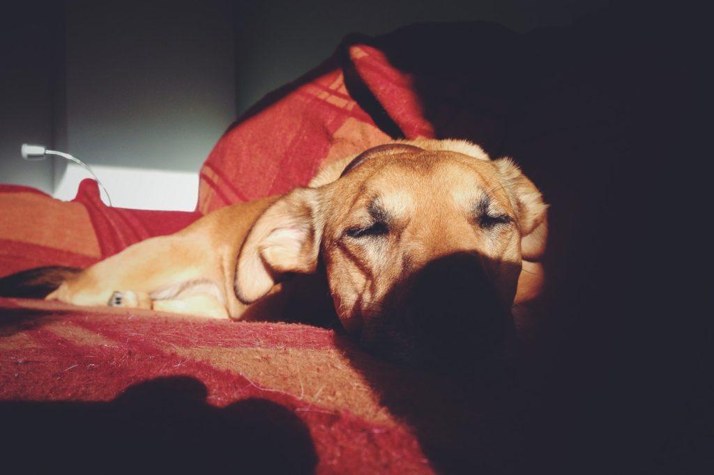 Hundeklappe Chip gesteuert